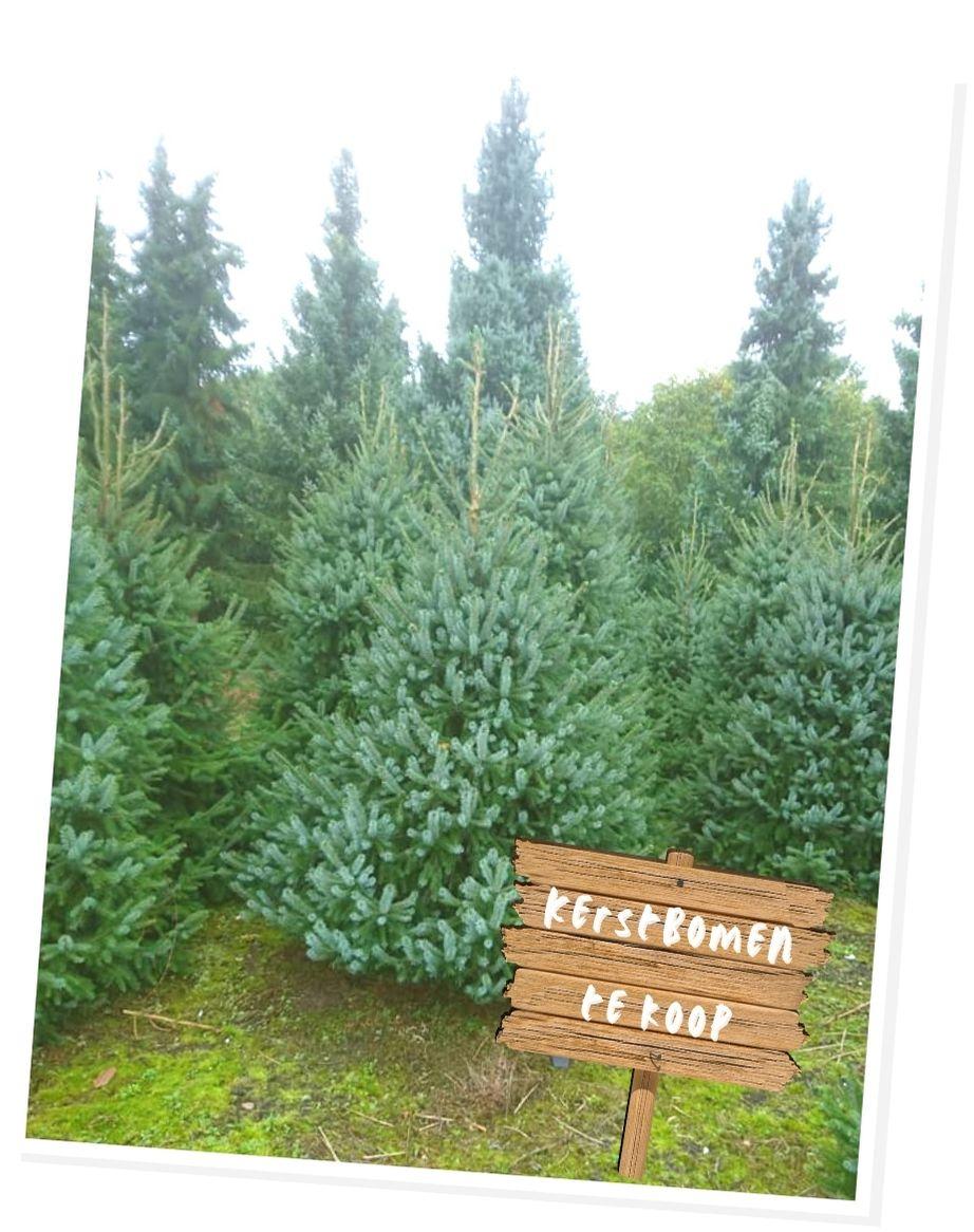 kerstbomen te koop noord beveland